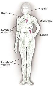 manual lymphatic drainage physiopedia