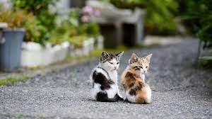 Cute Couple Kitten Cat Wallpapers ...