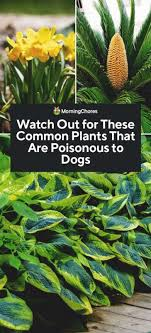 37 common plants that are poisonous to dogs