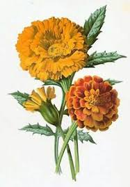 Details About Marigold Counted Cross Stitch Pattern 2207 Vintage Flowers Floral Graph Chart