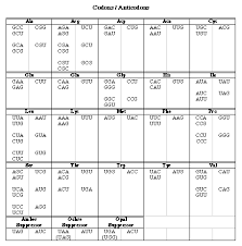 Trna Codon Chart Wobble