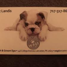 photo of wags wash and groom spa lancaster pa united states