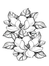 Small Picture Magnolia coloring pages Download and print Magnolia coloring pages