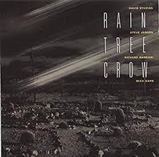 <b>Rain Tree Crow</b>