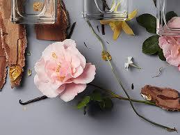 Подарки: для красоты и благоухания   The Art Newspaper Russia ...