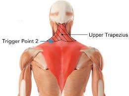 Most relevant best selling latest uploads. Plyopic Massage Balls Set Neck Shoulders And Upper Back