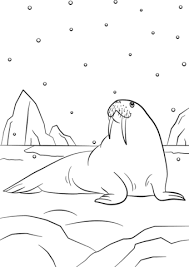 Small Picture Cartoon Walrus coloring page Free Printable Coloring Pages