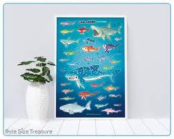 Shark Size Chart Shark Size Chart 13x19 Paper Poster Unframed Shark Species Art Print Great For Offices Nurseries Bedrooms