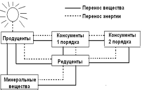 Реферат Понятие экосистемы сукцессии и ее видов Рис 2 Схема переноса веществ и энергии в природных экосистемах