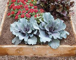 how to build a wood raised garden bed