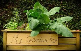 improving your raised bed garden soil