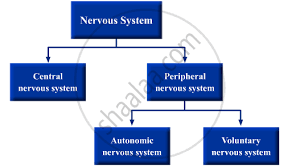 Nervous System Flow Chart Draw A Flow Chart To Show The Classification Of The Nervous