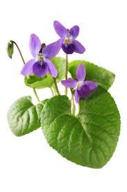 Resultado de imagen para Remedios naturales para la tos