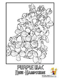 Small Picture State Flower Printouts Nebraska Oregon Flower Coloring
