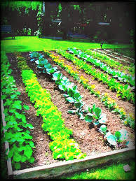 small vegetable garden layout ideas budget on a lawn patio design plan ahead of