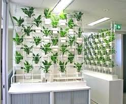 indoor living wall ideas plant on walls best indoor plant wall ideas on plant wall succulent
