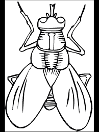 Cartoon Insect Coloring Pages Sketch Coloring