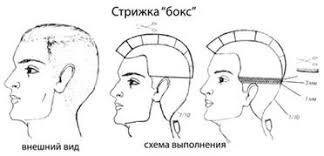 Курсовая работа Современные тенденции базовых стрижек  Стрижка бокс рекомендуется для коротких волос любого типа