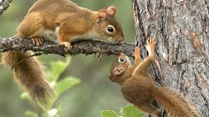 squirrel for kids. Squirrel For Kids