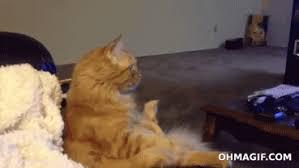 cat watching tv gif. cat gif watching tv gif u