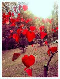 hearts in nature lots of love for the leaves of this tree beautiful and special