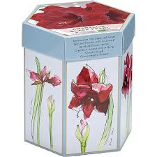 van zyverden amaryllis black pearl hostess gift kit with mammoth bulb