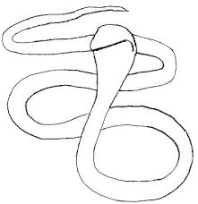 snake drawings step by step. Plain Step How To Draw Snake Step 3 With Snake Drawings By