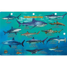 franko maps shark and rays fish id card