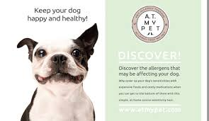 New 'Allergy Test My Pet' Offers In Home Testing For Dogs And Cats ...