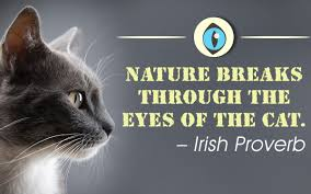 An Incredibly Awesome Collection Of Quotes About Cats