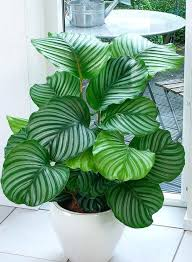 perfect office plants. Perfect Office Plant For Plants