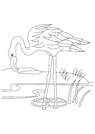 Pond Coloring Pages 488websitedesigncom