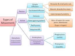 Venn Diagram Of Diffusion Osmosis And Active Transport Cellular Transport Ms Raeons Biology Website