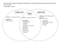 Venn Diagram Plants Venn Diagram Between Plant And Animal Cells Michaelhannan Co