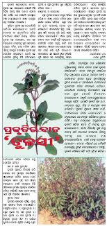 acirc medicinal plants agriculture farming medicinal plants chitta comments off on tulasi plant is nature s gift samaja