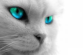 tabby cat wallpapers top free tabby