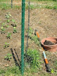 chicken wire fence ideas. Wire Garden Fence Chicken Gate Small  Ideas .