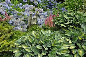 hosta companion plants what to plant
