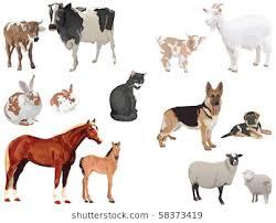 domestic animals clipart. Interesting Domestic Clip Art Set Of Domestic Animals With Cubs Throughout Domestic Animals Clipart I