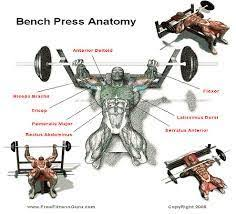 Incline Barbell Bench Press Instructions And Video  Weight Incline Bench Press Grip