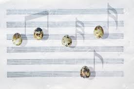 Stave Music Japanese Quail Eggs In Front Of A Blank Six Stave Music Paper