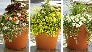 44 Best Shrubs For Containers  Best Container Gardening Plants Container Garden Ideas Full Sun