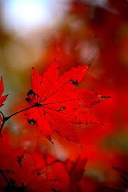 """Résultat de recherche d'images pour """"automne en rouge"""""""