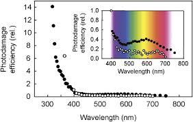 Action Spectrum The Solar Action Spectrum Of Photosystem Ii Damage Plant
