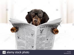 Dackel Wurst Hund Lesen Einer Zeitung Zeitschrift Im Schlafzimmer