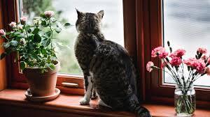 So Machst Du Dein Zuhause Katzensicher All About Diy