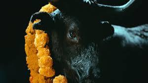 Black White Design Images Foals Black Bull Official Music Video