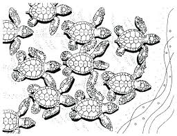Coloring Page Of A Turtle Turtle Coloring Pages Green Sea Turtle