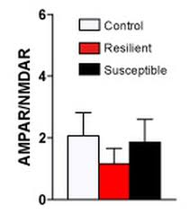 excitatory transmission at thalamo striatal synapses mediates excitatory transmission at thalamo striatal synapses mediates susceptibility to social stress nature neuroscience nature research