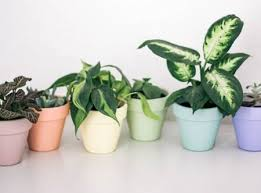 painted flower pots you can create for